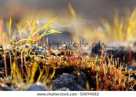 Beautiful and colorful moss sprout early spring - stock photo