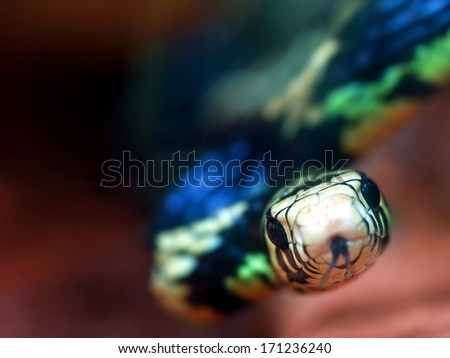 Beautiful and colorful snake looking up to the camera - stock photo