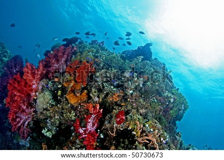 beautiful and colorful underwater view at Ambon, Maluku, Indonesia