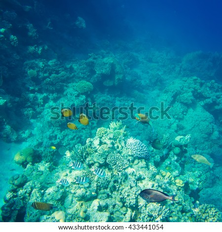beautiful and diverse coral reef with fish of the red sea in Egypt, shooting under water