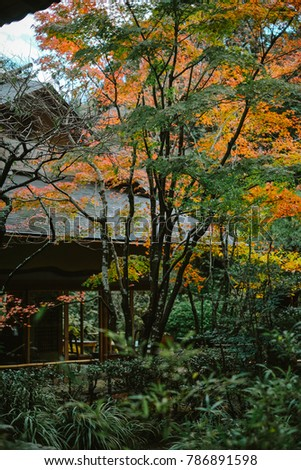 Beautiful and traditional Japanese autumn scenery in Kamakura, Kanagawa prefecture, Japan