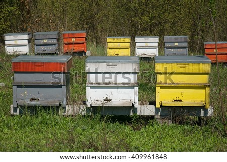 beautiful apiary on the spring sunshine