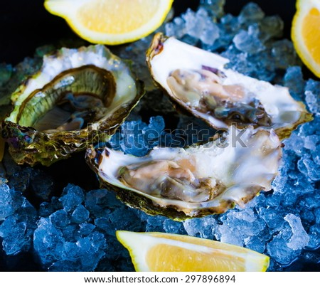 beautiful appetizer oysters luxury life background studio food