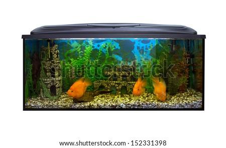 Beautiful aquarium on a white background - stock photo