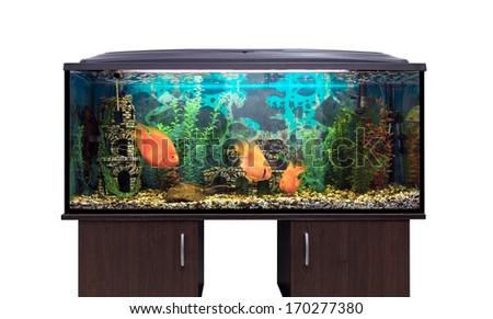 Beautiful aquarium on the stand, white background - stock photo