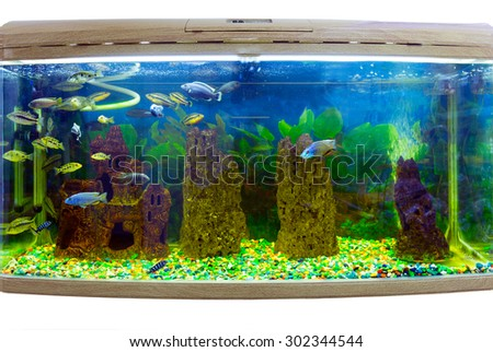 Beautiful aquarium with tropical fish on a white background - stock photo