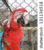 Beautiful Ara parrot in zoo - stock photo