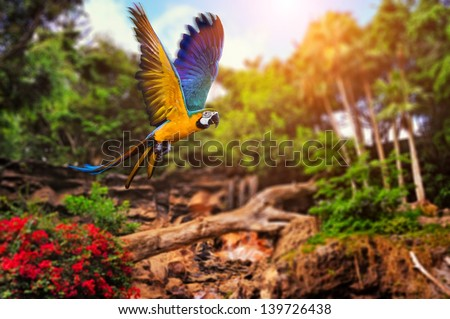 Beautiful Ara parrot on tropical forest background - stock photo
