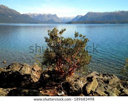 Beautiful arrayan tree lake Patagonia, Argentina. - stock photo
