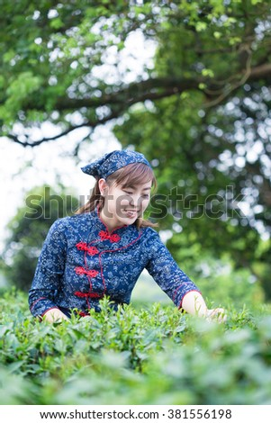 beautiful Asian girl working in green tea plantation