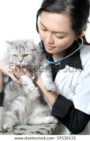 Beautiful Asian woman Veterinarian examining a cat