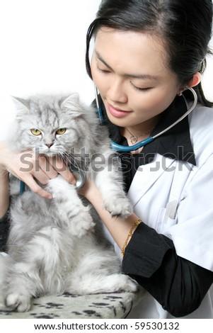 Beautiful Asian woman Veterinarian examining a cat - stock photo