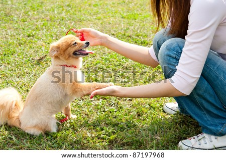 beautiful asian woman with dog in the park