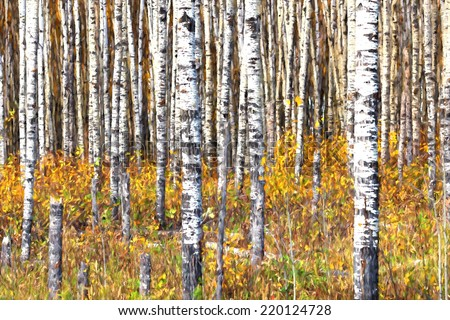 Beautiful aspen trees (Populus tremuloides) showing off their colors in autumn. Image is rendered as if it was an oil painting. - stock photo