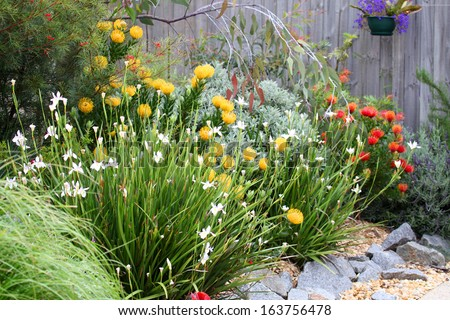 Beautiful Australian garden full of native plants and flowers - stock photo
