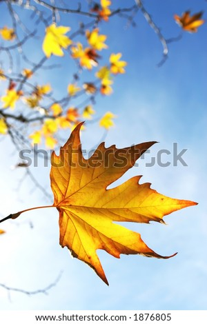 Beautiful autum leaves against sky - stock photo