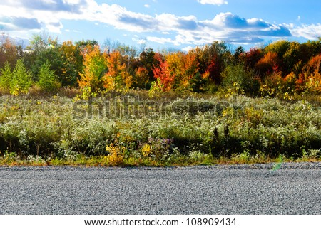 Beautiful autumn background - stock photo