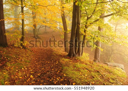 Beautiful autumn color forest with morning fog and foliage