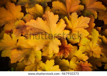 beautiful autumn colored plant. nature