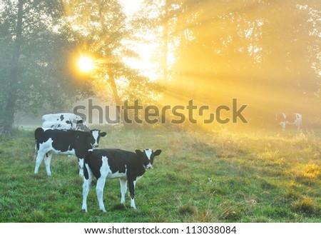 Beautiful autumn dawn - stock photo