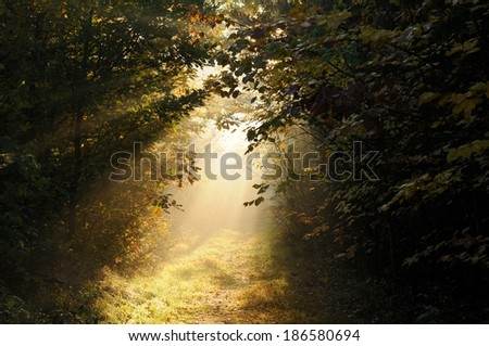 Beautiful autumn dawn in forest - stock photo