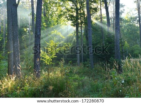 Beautiful autumn dawn in the forest