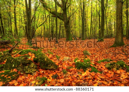 Beautiful Autumn Fall forest scene with bright vibrant colors and blanket of golden leaves on ground