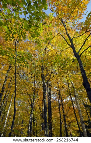 Beautiful autumn fall forest scene with vibrant colors. Mono cliffs Provincial Park. - stock photo