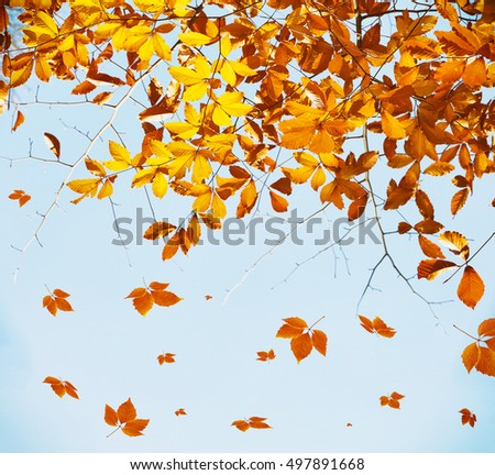 Beautiful autumn foliage on sky background.