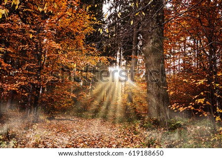 Beautiful autumn forest.
