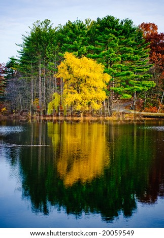 Beautiful autumn forest and reflection