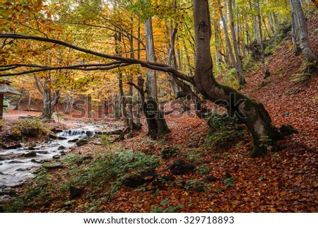 Beautiful autumn forest at the foot of the Carpathian Mountains