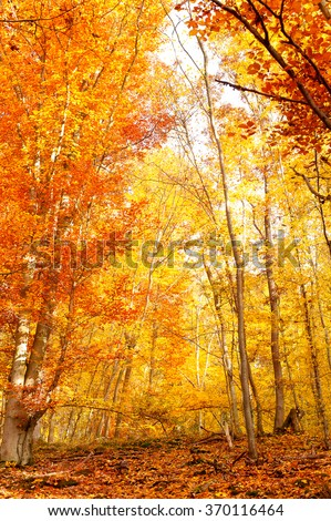 Beautiful autumn forest in fall season full of red leaves. Multicolored vertical outdoors image. - stock photo