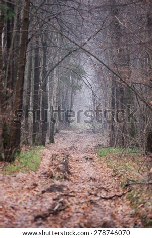beautiful autumn forest in middle Russia with blurry first plane - stock photo