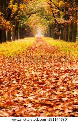 Beautiful autumn forest in national park 'De hoge Veluwe' in the Netherlands - stock photo
