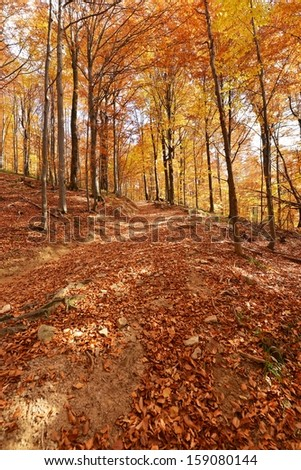 Beautiful autumn forest in Poland - Bieszczadzki National Park