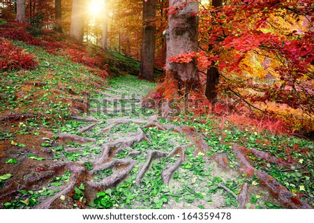 Beautiful autumn forest in red and orange tones - stock photo