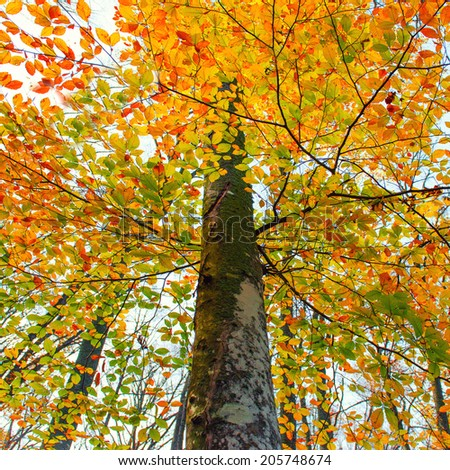 Beautiful autumn forest in the park with yellow and red trees - stock photo