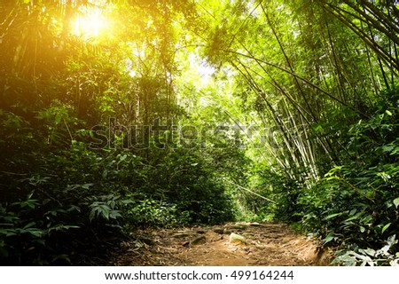 Beautiful autumn forest mountain path at sunrise