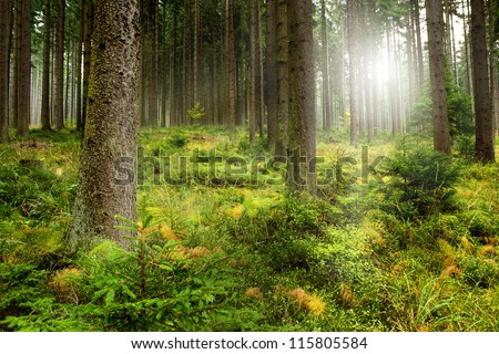 Beautiful autumn forest mountain path at sunset - stock photo