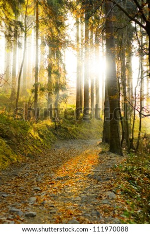 Beautiful autumn forest mountain path at sunset vertical composition - stock photo