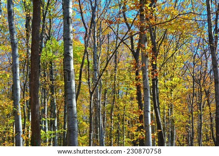 Beautiful autumn forest near the Sevastopol town - stock photo