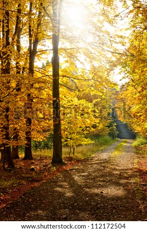 Beautiful autumn forest sun shining through trees illuminating the path - stock photo