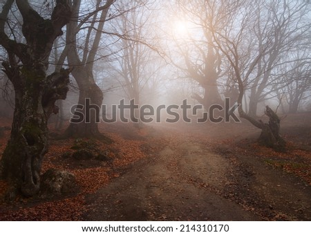 Beautiful autumn forest with mist in the distance - stock photo