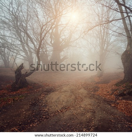Beautiful autumn forest with mist in the distance