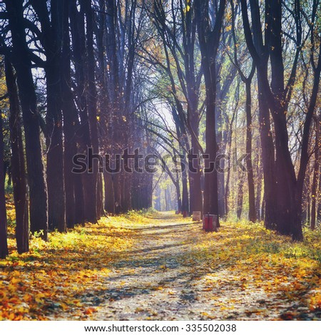 Beautiful autumn in forest. Nature trees  sunlight backgrounds - stock photo
