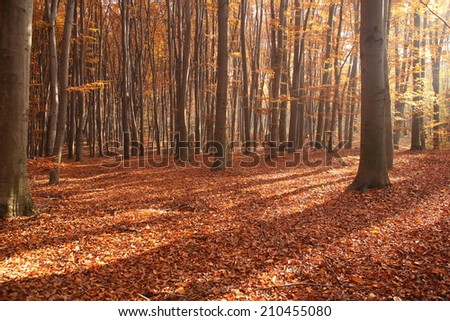 Beautiful autumn in the forest. Autumn landscape. Composition of nature. - stock photo
