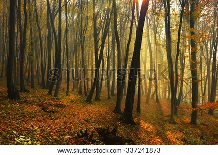 beautiful autumn landscape, autumn forest