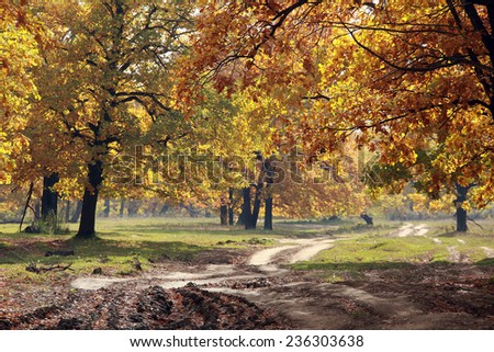 beautiful autumn landscape dirt road in forest on a warm sunny day