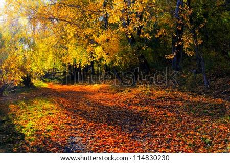 Beautiful autumn landscape. Fall season. - stock photo